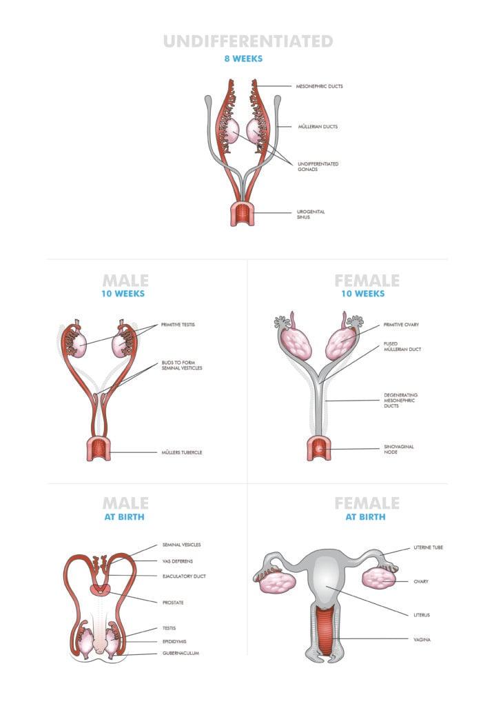 Congenital Anomalies Of The Female Genital Tract Og Magazine