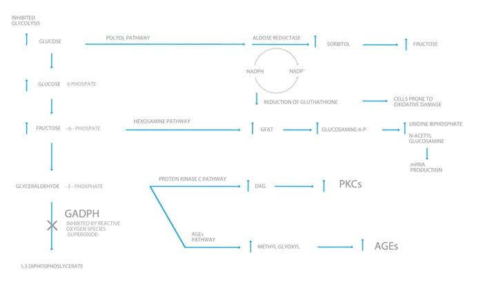 The pathways to cellular destruction.